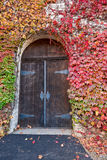 Ivy Covered Old Winery Door Royalty Free Stock Photo