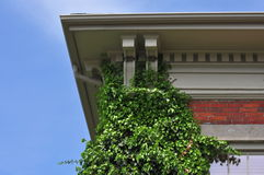 Ivy Covered Wall. Old house with ivy growing up a wall Royalty Free Stock Photo
