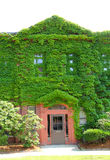 Ivy covered wall, entrance, newspaper building, downtown Keene, Royalty Free Stock Photo