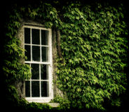Ivy Covered window Royalty Free Stock Photography
