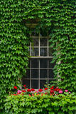 Ivy Covered Window Royalty-vrije Stock Afbeeldingen