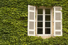 Ivy Covered Window Stock Image