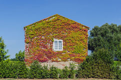 Ivy creeper house Royalty Free Stock Photography