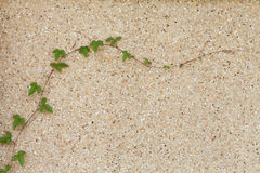 Ivy or creeping plant. On the wall Royalty Free Stock Image