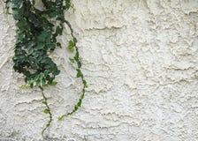 Ivy decorate wall Stock Photos