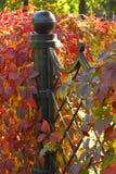 Ivy decoration Royalty Free Stock Photo