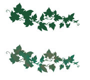 Ivy decoration. Elegant and whimsical ivy decoration plain and with texture Royalty Free Stock Images