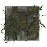 Ivy on dirty paving tiles Royalty Free Stock Photo