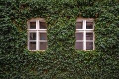 Ivy facade of a house in Trebitsch, Czech Republic Stock Photography