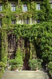 Ivy facade. Milan, Italy - October 4, 2015: Entrance of a residential building on the Viale Luigi Majno Royalty Free Stock Photo