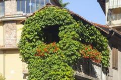 Ivy facade Stock Photo