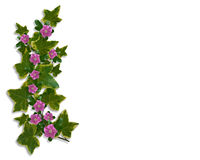 Ivy Floral design border element Stock Photography