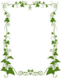 Ivy floral template Royalty Free Stock Photography