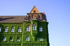 Ivy Flower Covers Building Over The Blue Sky Royalty Free Stock Photos