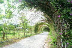 Ivy flower tunnel Royalty Free Stock Photos