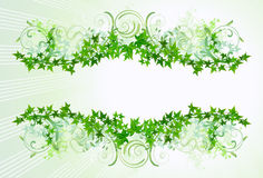 Ivy Frame Stock Photography