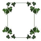 Ivy Frame 2 Stock Photos
