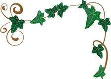 Ivy frame. Vector illustration of frame from ivy Stock Images