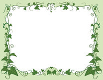 Ivy frame Stock Image