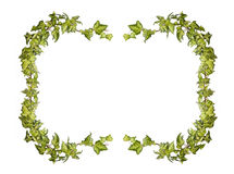 Ivy frame Royalty Free Stock Image