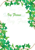 Ivy frame. Spring ivy corner background,  illustration Royalty Free Stock Photography