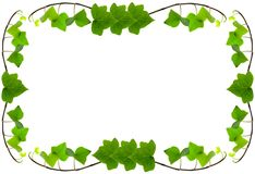 Ivy Frame Background Royalty Free Stock Image