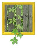 Ivy in frame. Ivy on plank fence placed in frame Royalty Free Stock Images