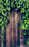 Ivy frame on wooden fance with Instagram style filter Royalty Free Stock Photography
