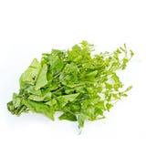 Ivy Gourd (Coccinia grandis (L.) Voigt) Lizenzfreie Stockfotos