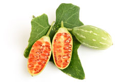 Ivy Gourd Stock Photos