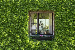 Ivy, green window. Royalty Free Stock Photography