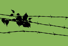 Ivy Growing on Barbed Wire Stock Image