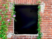 Ivy Growing On Brick Wall met een Oud Venster royalty-vrije stock foto's