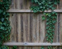 Ivy growing on old wooden garden fence stock photos