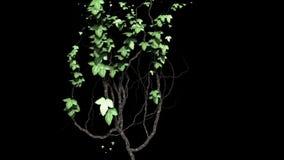 Ivy Growth met Alpha Matte vector illustratie
