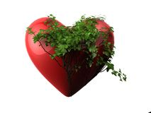 Ivy heart Stock Photography