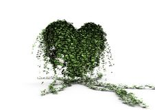 Ivy heart Royalty Free Stock Photography