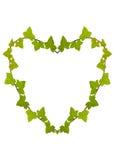 Ivy Heart Royalty Free Stock Photos