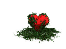 Ivy heart Stock Image