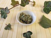 Ivy, Hedera folium Royalty Free Stock Images