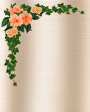 Ivy, Hibiscus and Roses Template stock illustration