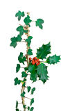 Ivy and Holly. Stock Image