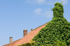 Ivy-House Stock Photography