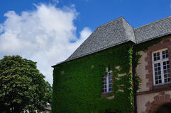 Ivy house. In France Rodez 2010 Royalty Free Stock Photo