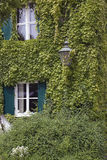 Ivy house. A House covered with ivy royalty free stock images