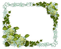 Ivy and Hydrangea Floral Border invitation Royalty Free Stock Photo