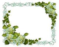 Ivy and Hydrangea Floral Border invitation Royalty Free Stock Photo