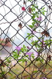 Ivy intertwined mesh fence. Abstract, background, barrier, brown, cage, chain, chained, chainlink, creeper, design, detain, dirty, element, enclose, enclosure stock photography