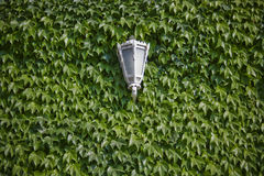 Ivy lamp royalty free stock photography