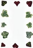 Ivy leaf border Royalty Free Stock Image